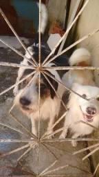 Doação de dois cachorros