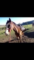 Cavalo de lida