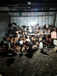 150 aves 25,00 30,00 35,00 cada