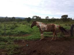 198 - Extraordinária fazenda em Buenópolis aceita parte em imoveis