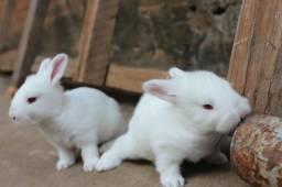 Promoção leva 3 e paga 2 coelhos so 20 reais