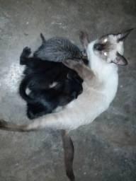 Estou doando gatos filhotes