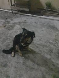 Estou doando minha cachorrinha por motivo de viagem