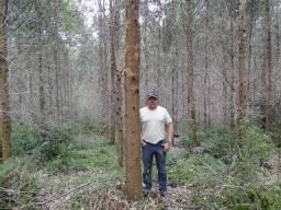 Vendo terreno no Xavier da Silva