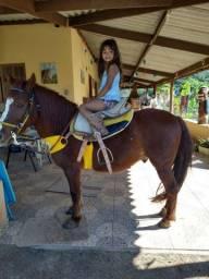 Cavalo PIQUIRA PONEY domado para crianças especiais