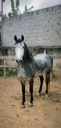 Cavalo M.M registrado