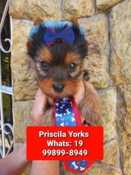 *****yorkshire Terrier baby face