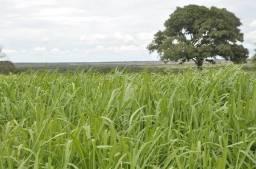 Fazenda 138 alqueires á 50 km de Gurupi