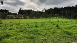 Terreno para Venda, 79.000,00 m², Rio Negrinho / SC, bairro Colonia Olsen-São Pedro