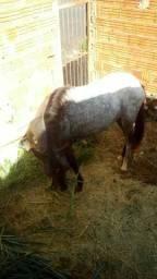 Egua 2 anos