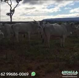 BOV1905 - 100 Vacas Nelore Extras Paridas - Piracanjuba/GO