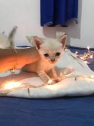 Gatinhos disponíveis pra adoção!