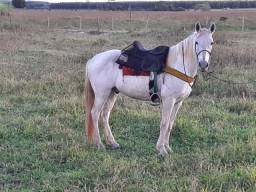Cavalo meio sangue manga larga