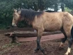 Cavalo vendo