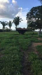 Fazenda 177 hectares perto de Guajara Mirim