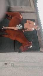 Cavalo 3 anos vem nos rolo