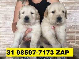 Canil Premium Cães Filhotes BH Golden Pastor Akita Boxer Rottweiler Labrador
