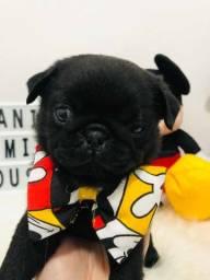 Vendo Pug Black fêmea 1400 a vista