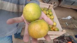Mexirica, laranja, banana, limão venda na caixa