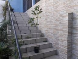 Muda Jaca árvore frutifera