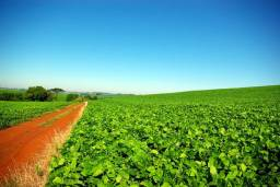Procuro terra para arrendar para plantio de soja