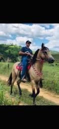 Cavalo marcha picada extra de bao