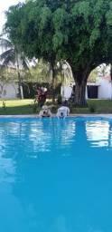 Filhote de Labradores com pedigree