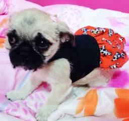 Vende-se mini filhote fêmea de Pug ou troco por yorkshire micro fêmea