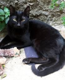 Doa-se gato macho em Sorocaba, Jardim Santa Rosália, Vila Progresso, urgente!