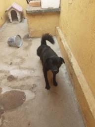 Cachorra femia para doar