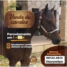 Potro Cavalo Potra Egua Quarto de Milha