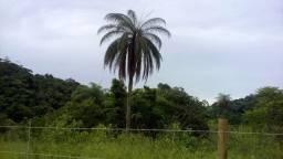 Fazendinhas Prontas Para Construir na Região de Caeté R$24.000,00 + Parcelas