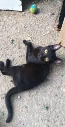 Adoção responsável gata (mini pantera)