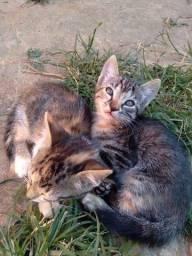 Doação de gatinhos (as)