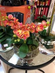 Mine orquídea