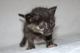 estamos DOANDO 2 gatinhas abandonadas pela mãe!!