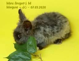 Lote mini coelhos