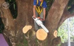 Poda e corte de árvores, coqueiros e palmeiras