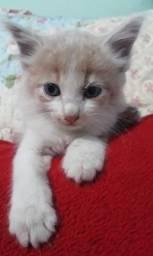 Doação Urgente de filhote de gato