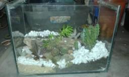 Terrario cactos e suculentas