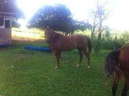 Cavalo 4 de milha