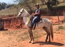 Cavalo mangalarga marcha batida