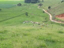 Linda propriedade com 63 hectares a venda em Canelinha SC!!!