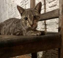 Gato macho para adoção!