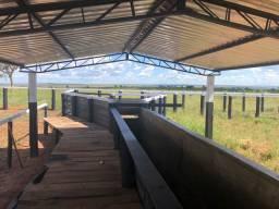 Fazenda 3700 hectares pecuária matogrosso