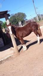 cavalo tostado 4 para branca