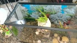 Aquario 25 litros