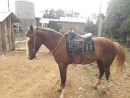 Vende-se égua