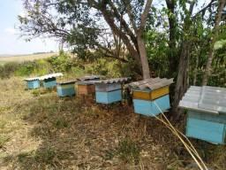 Vendo apiario