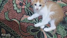 Adoção de filhotes de gatinhas com castração garantida